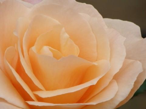 薔薇の魔法 認定講師になりました。